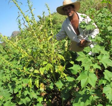 Consórcios Agroecológicos - produção de alimentos saudáveis